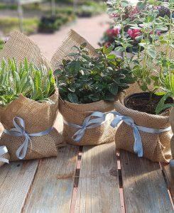 בוטניקו צמחים לאירועים